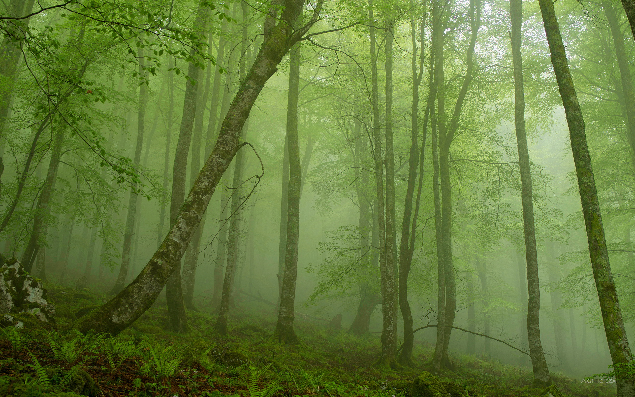 Foggy Forest iPhone Wallpaper - WallpaperSafari