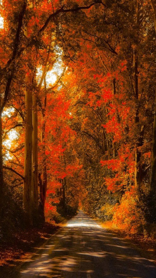 fall wallpaper for iphone iphone 6 autumn wallpaper wallpapersafari 2177
