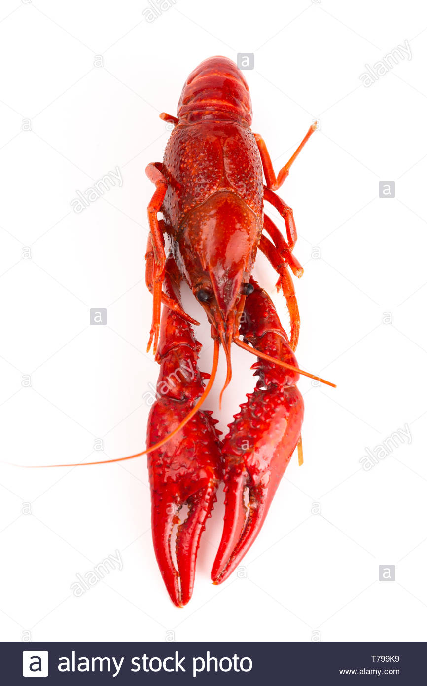 Cooked Red Crawfish Isolated on a White Background Stock Photo 866x1390