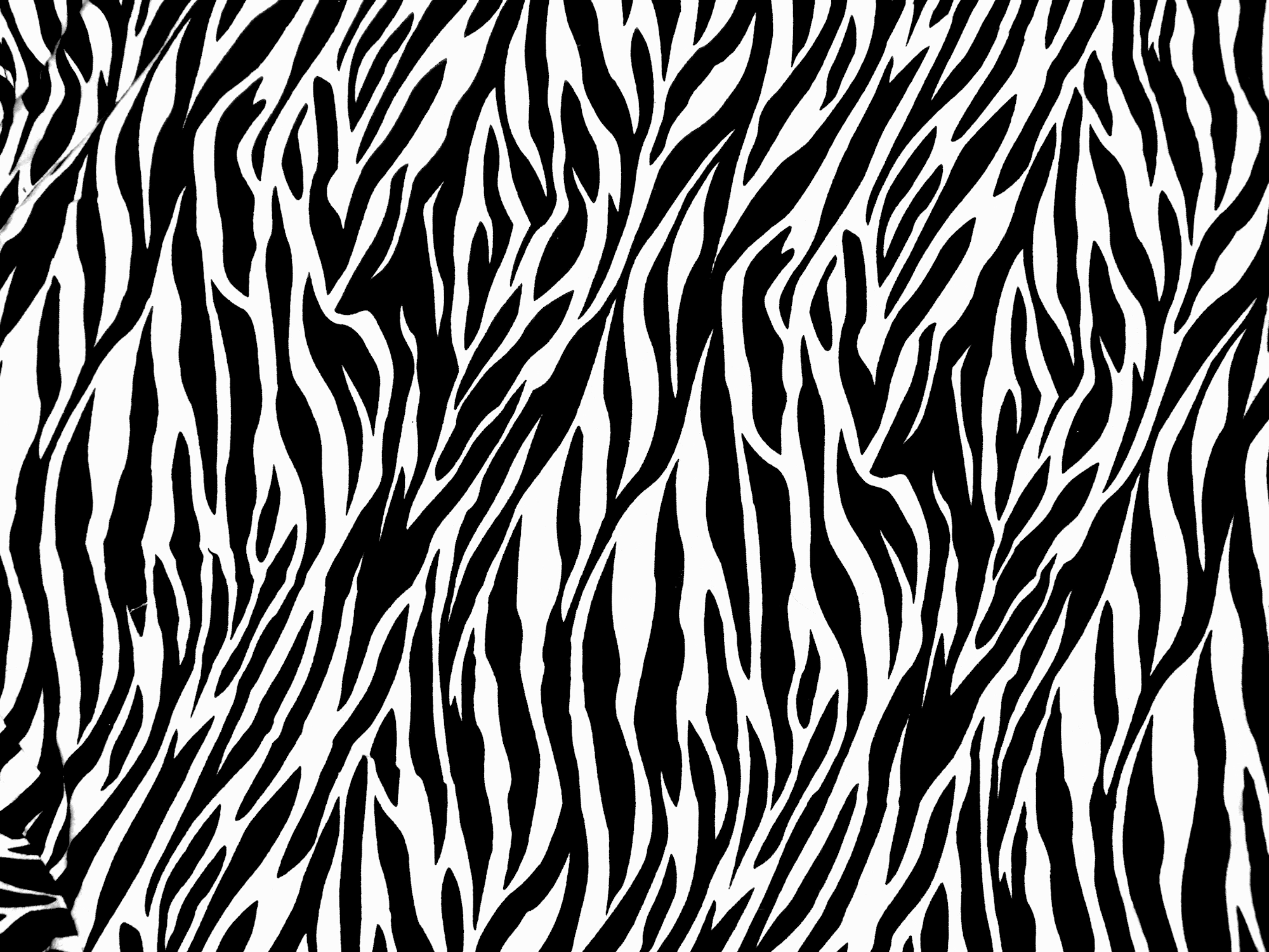 zebra print texture by ghoulskout 2000x1500