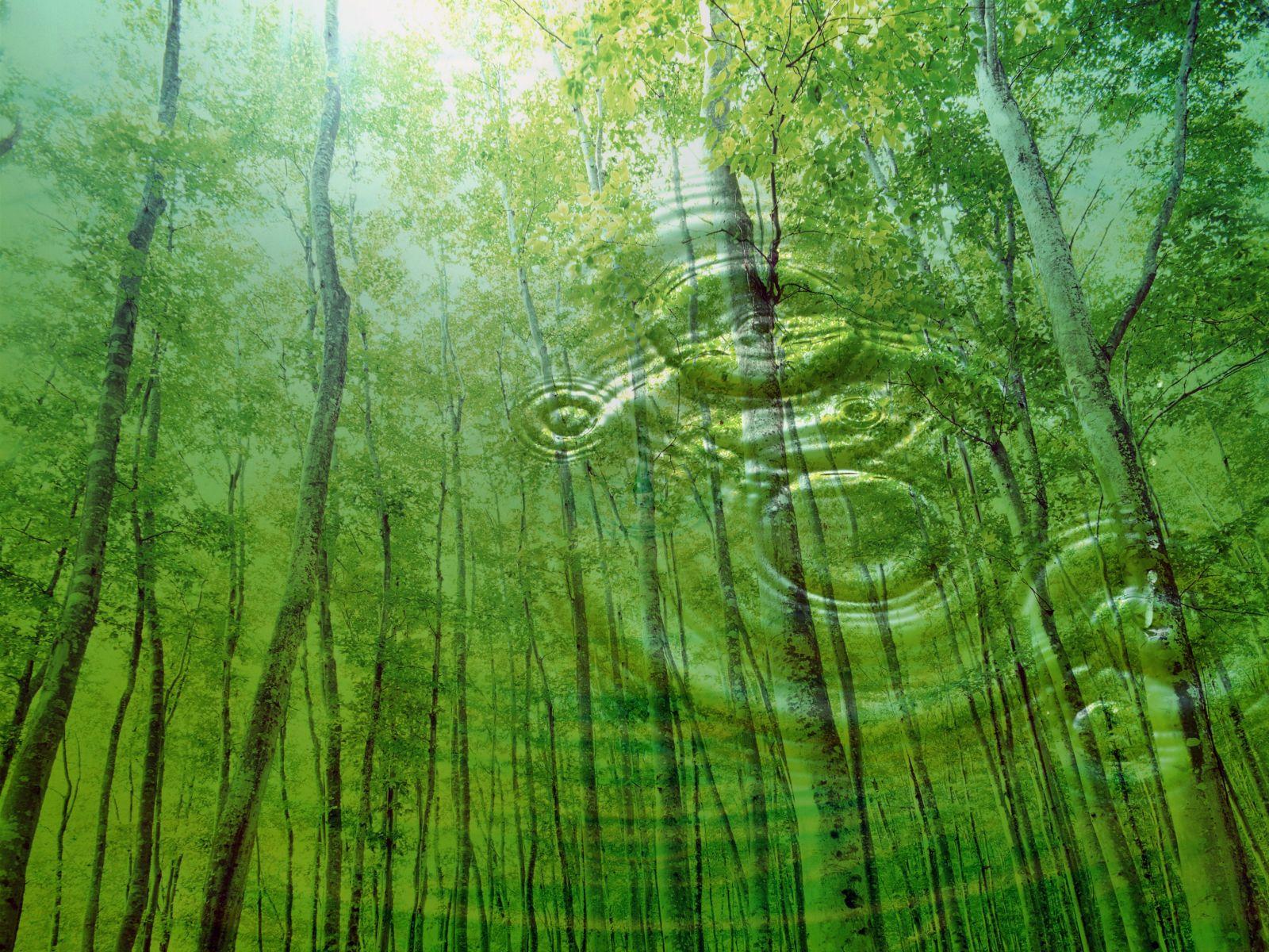 Nature Backgrounds - WallpaperSafari