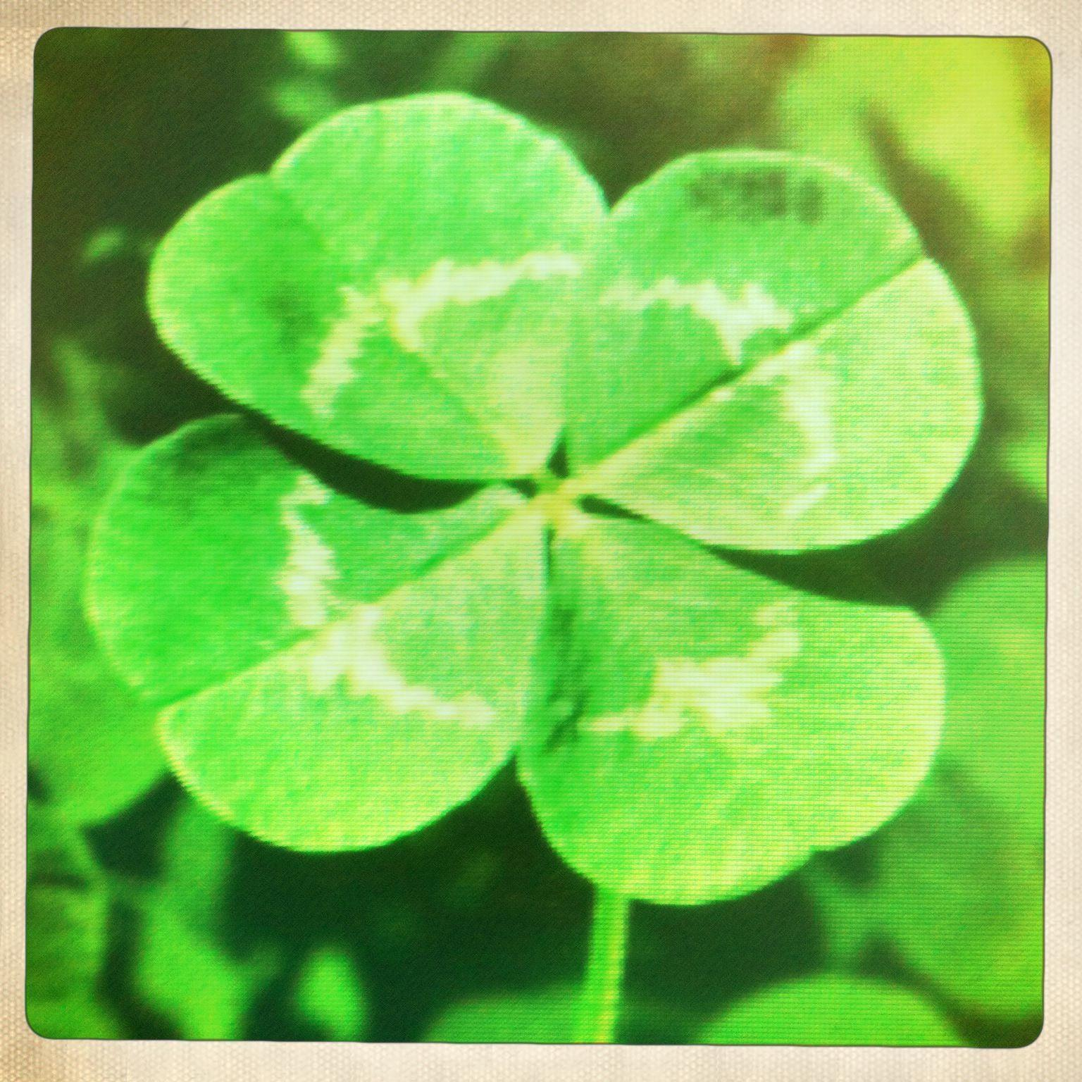 Four Leaf Clover Wallpapers 1536x1536