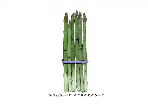 Sugarcane Wallpaper 500x375