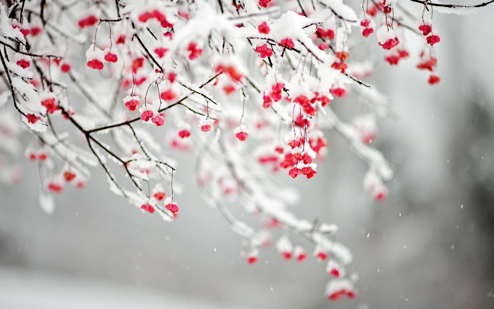 88 Winter Flowers Wallpapers On Wallpapersafari