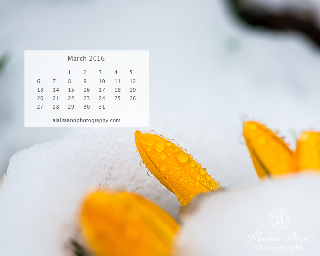 March 2016 Wallpaper Calendar Alaina Ann Photography 650x520