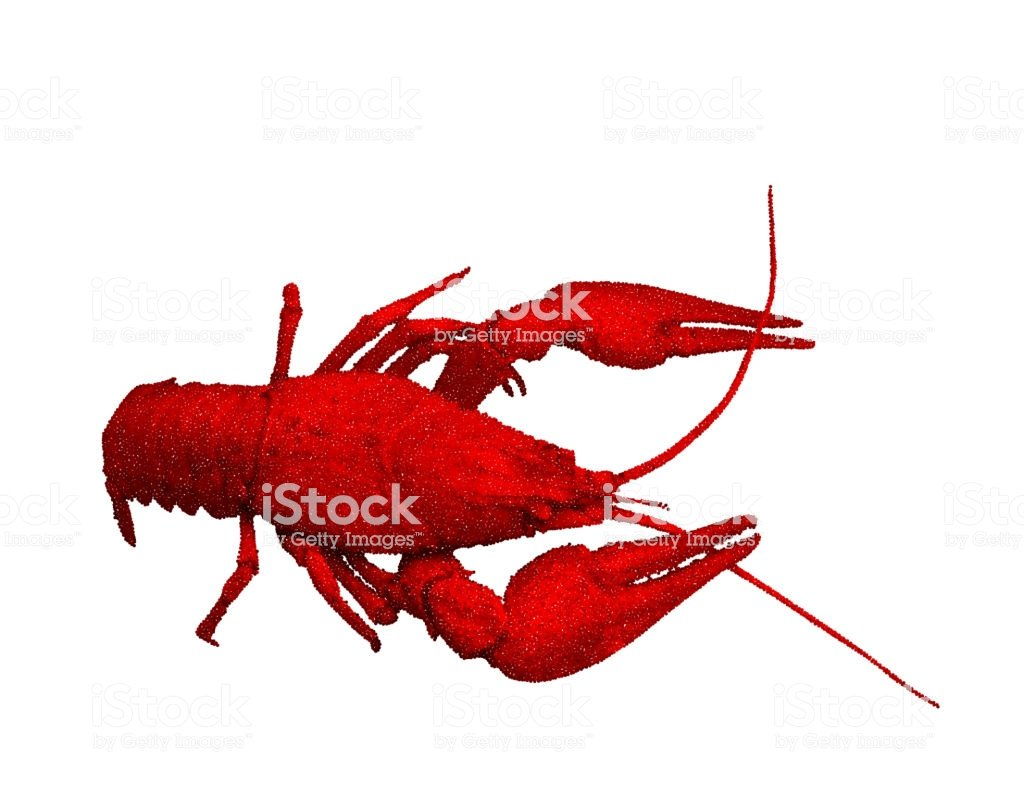 Red Crawfish Isolated On White Background Vector Illustration 1024x796