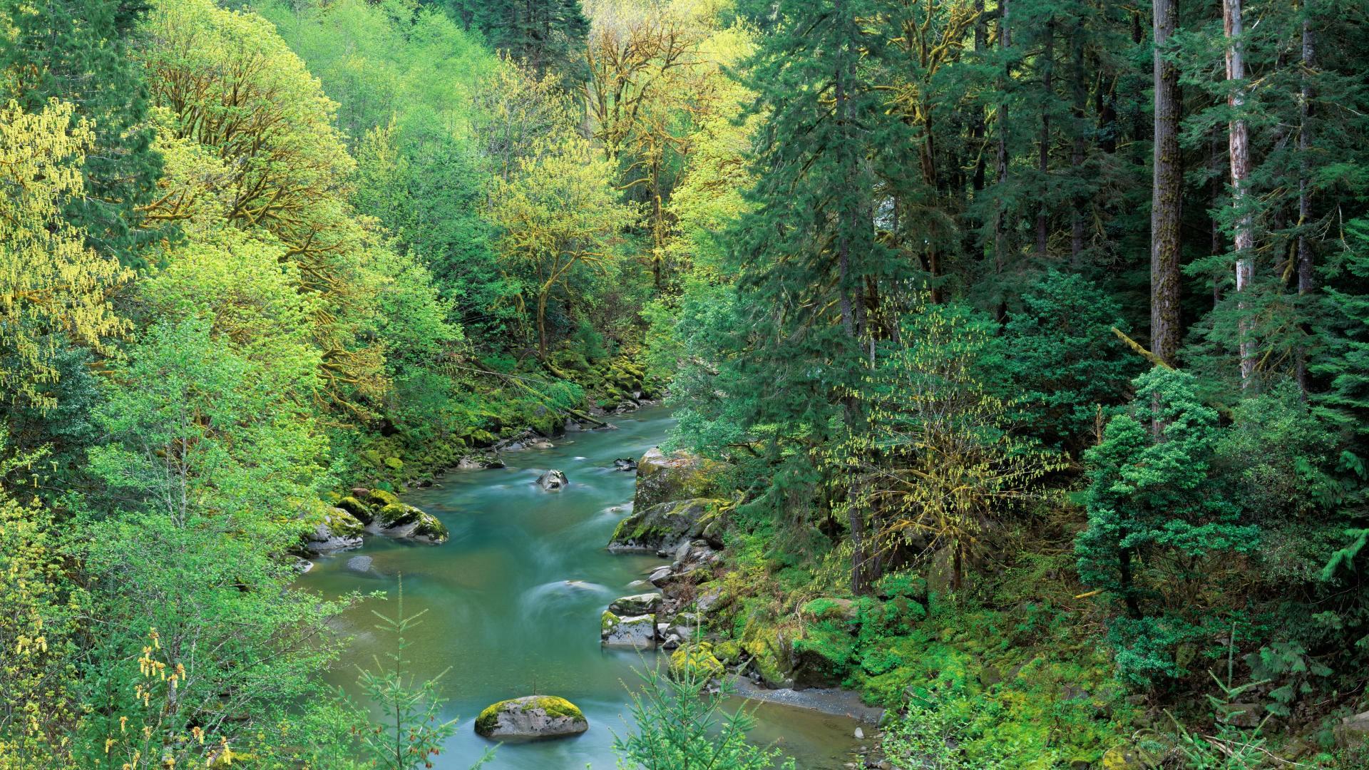 Oregon nature pictures wallpapers wallpapersafari - Oregon nature wallpaper ...