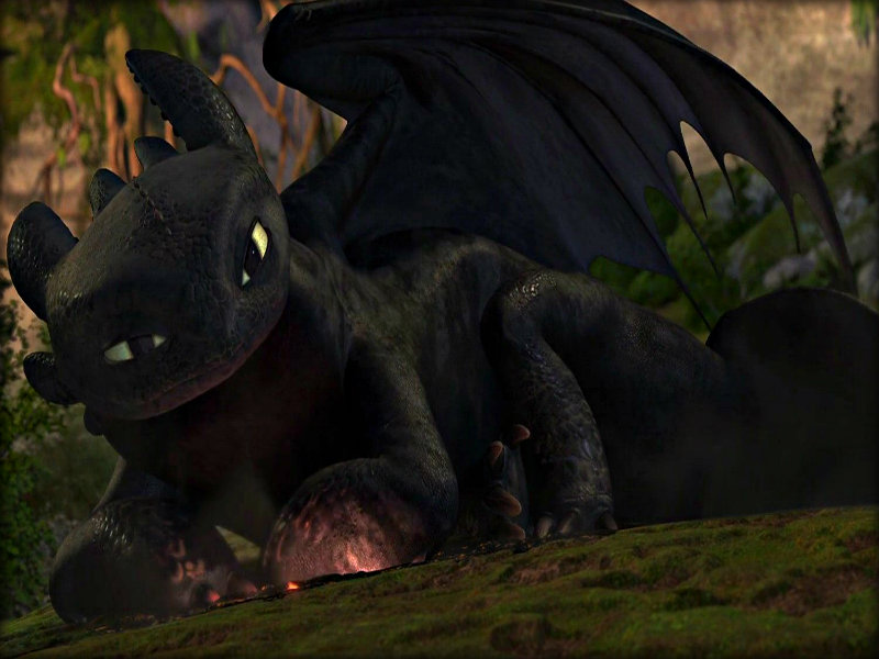 Toothless   Toothless the Dragon Wallpaper 32987039 800x600