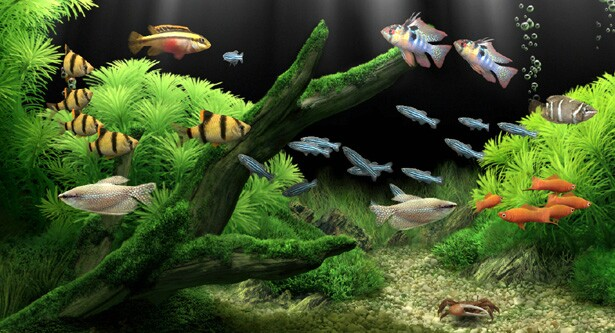 photo relating to Aquarium Backgrounds Printable identified as Absolutely free down load fish tank backgrounds printable sport picture