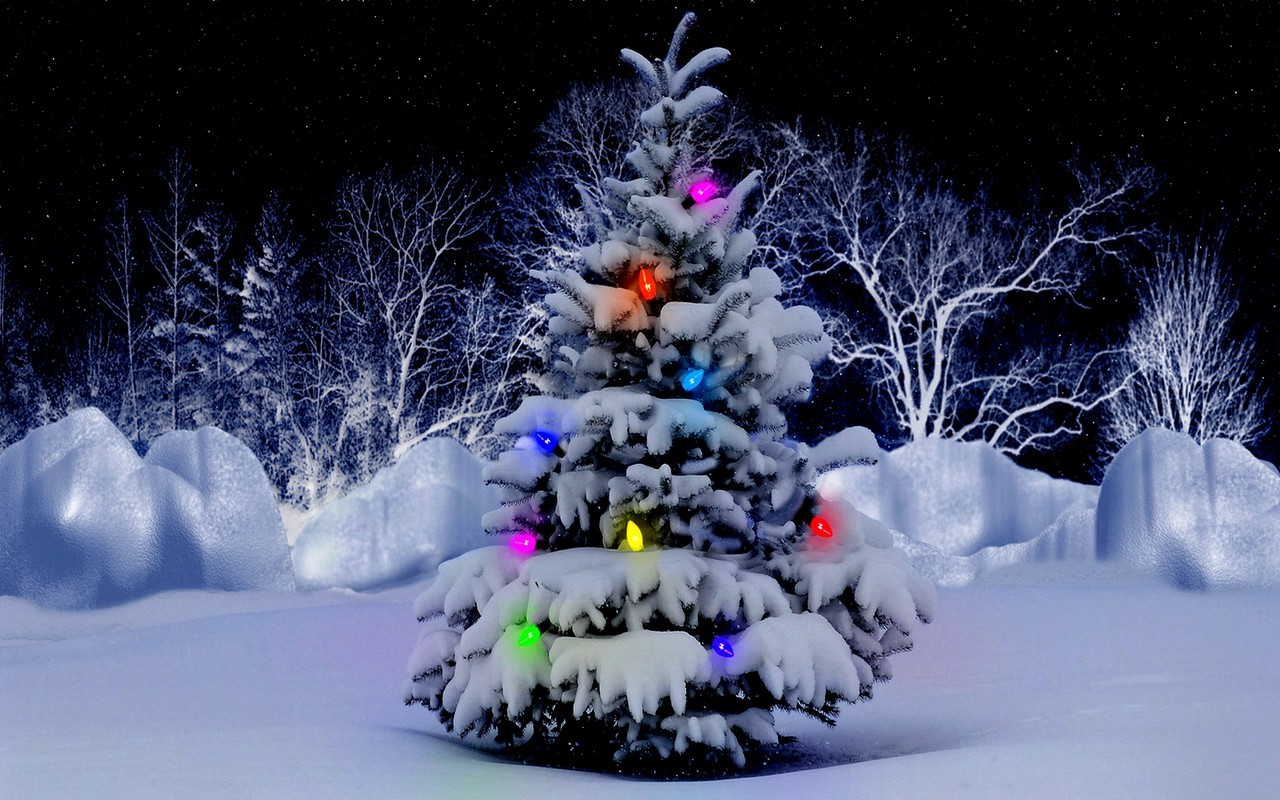 Snow Covered Christmas Tree Wallpaper download   Download 1280x800
