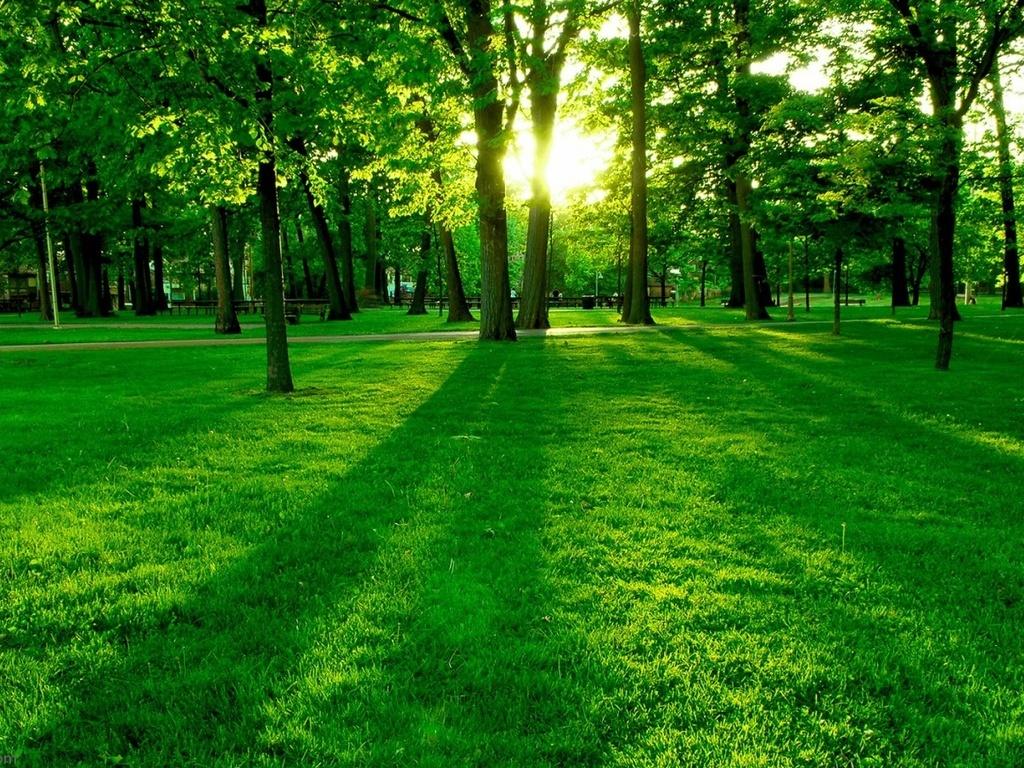 Green Grass Wallpaper Wallpapers   1024x768   504361 1024x768