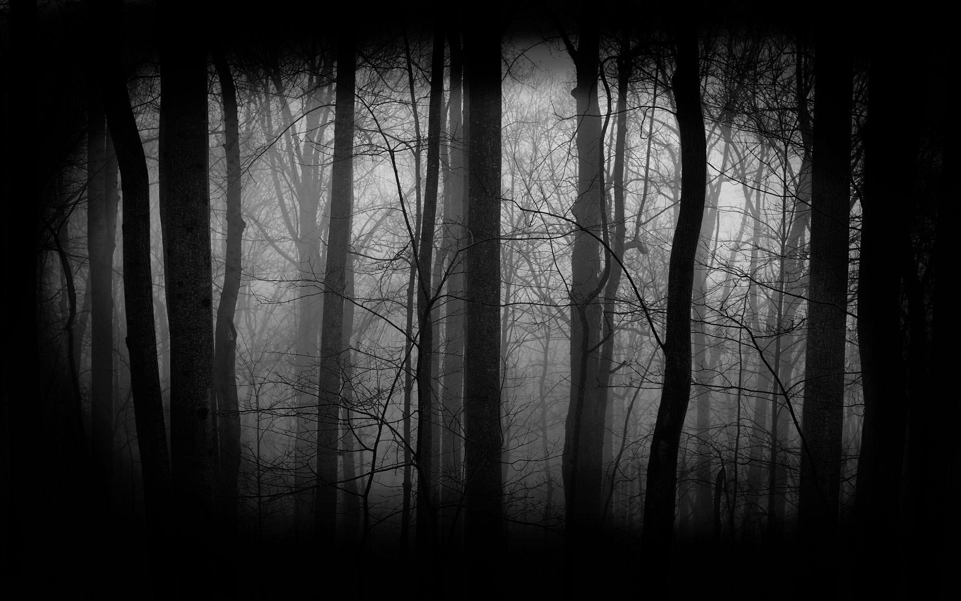 Dark Forest Wallpaper Images amp Pictures   Becuo 1920x1200