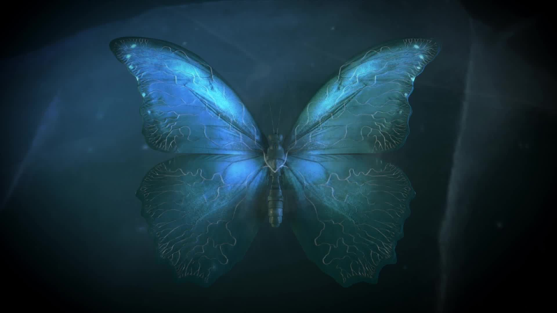 Butterfly Effect Wallpaper 30 image collections of wallpapers 1920x1080
