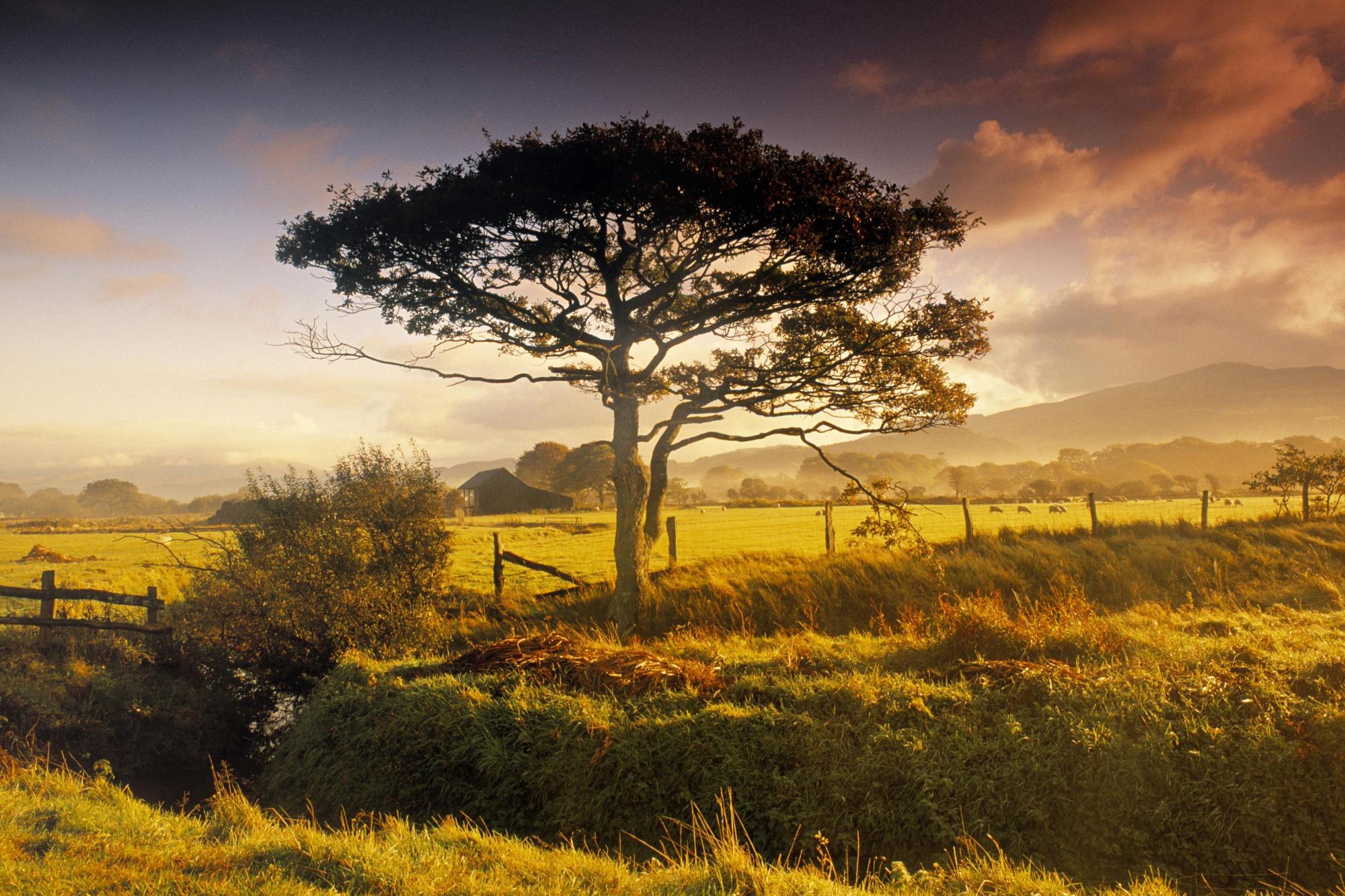 Farm Tree desktop wallpaper 2000x1333