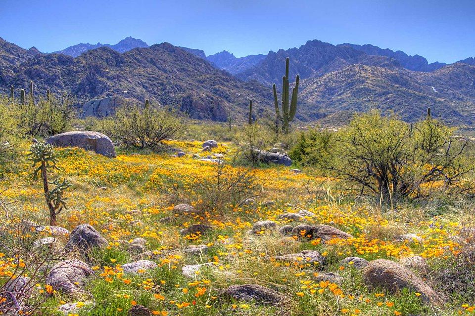 Tucson Desert httpenerqihealthcomdesert bloom in tucson 960x640