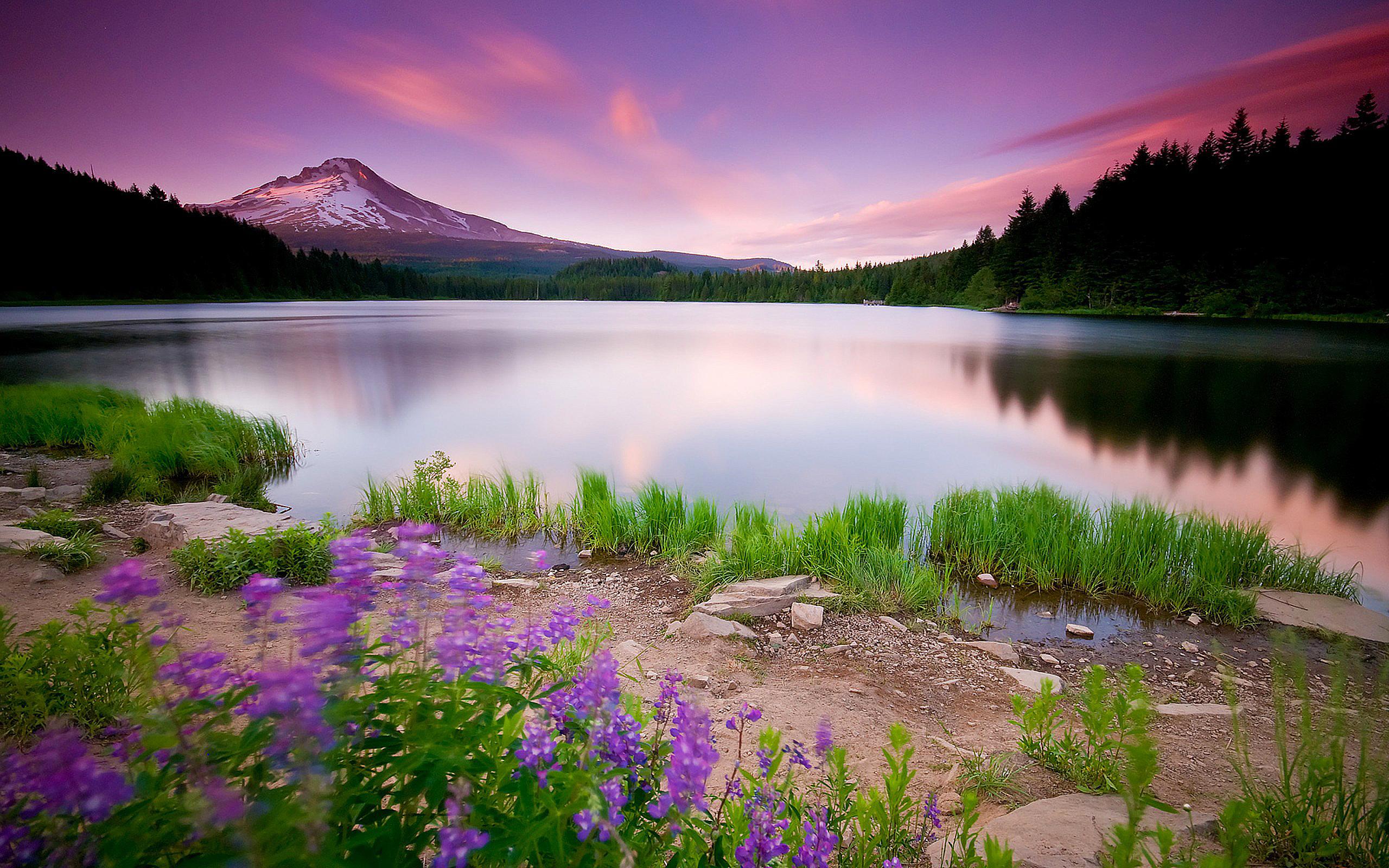 Beautiful Pink Landscape Nature HD Wallpaper   StylishHDWallpapers 2560x1600