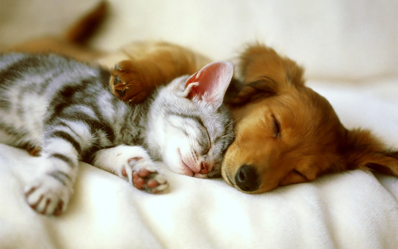 Wallpaper download funny - Funny Animals Pictures 17 Widescreen Wallpaper Wallpaper