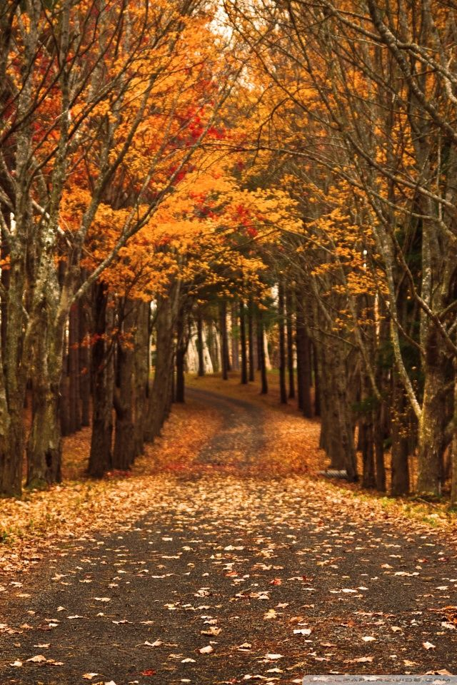 ideas about Fall Wallpaper Wallpapers iPhone 640960 640x960