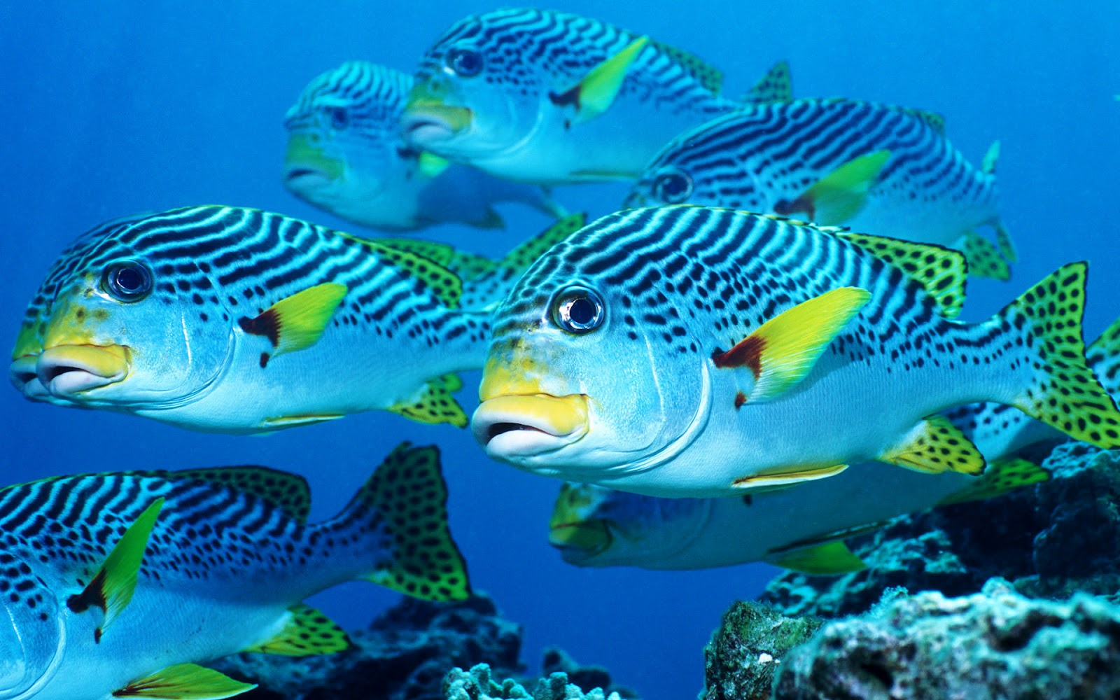 Picture with blue water with black white yellow fish 1600x1000