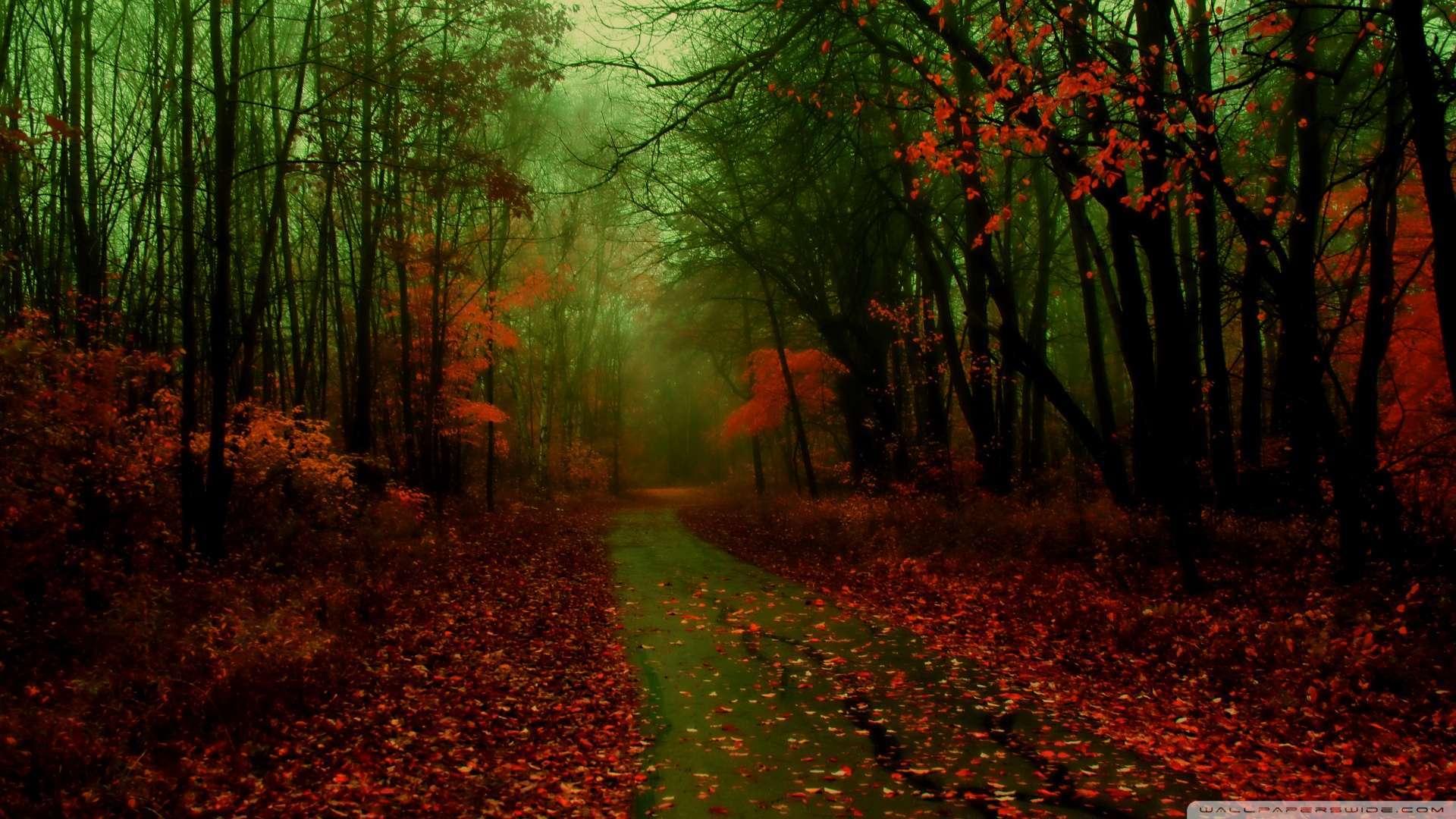 Download now Misty Autumn Wallpaper 1080p HD Read description infos 1920x1080