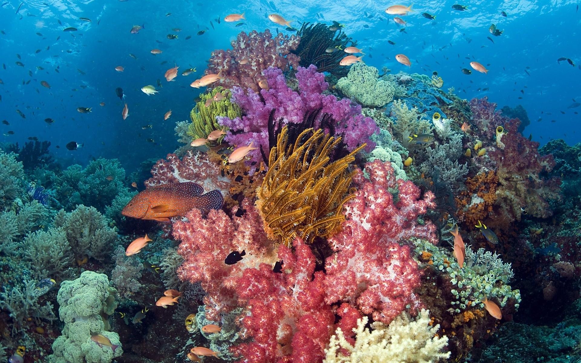 underwater coral reef ocean sea sunlight color wallpaper background 1920x1200
