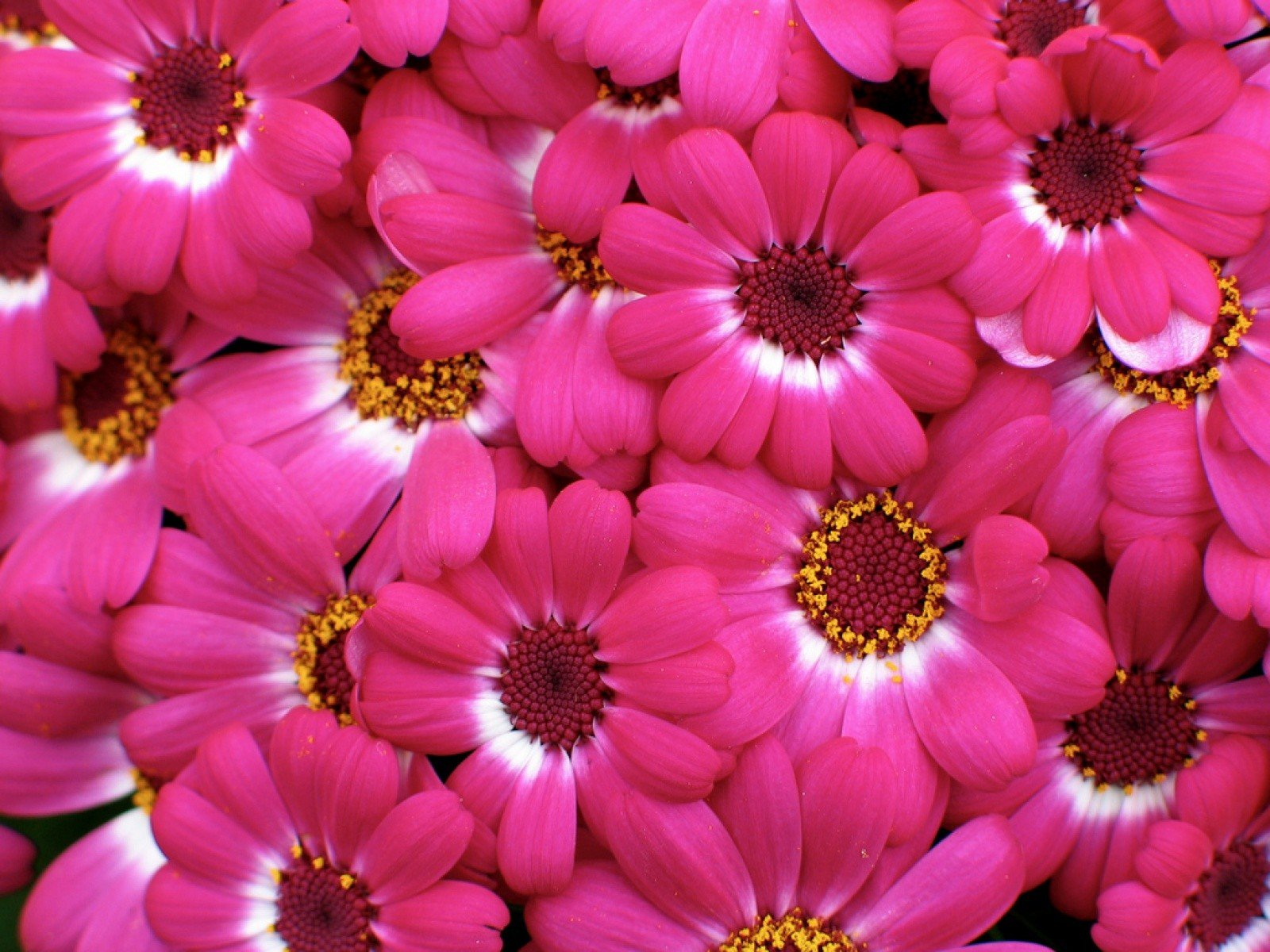 Pink Flowers Wallpaper Wallpapersafari