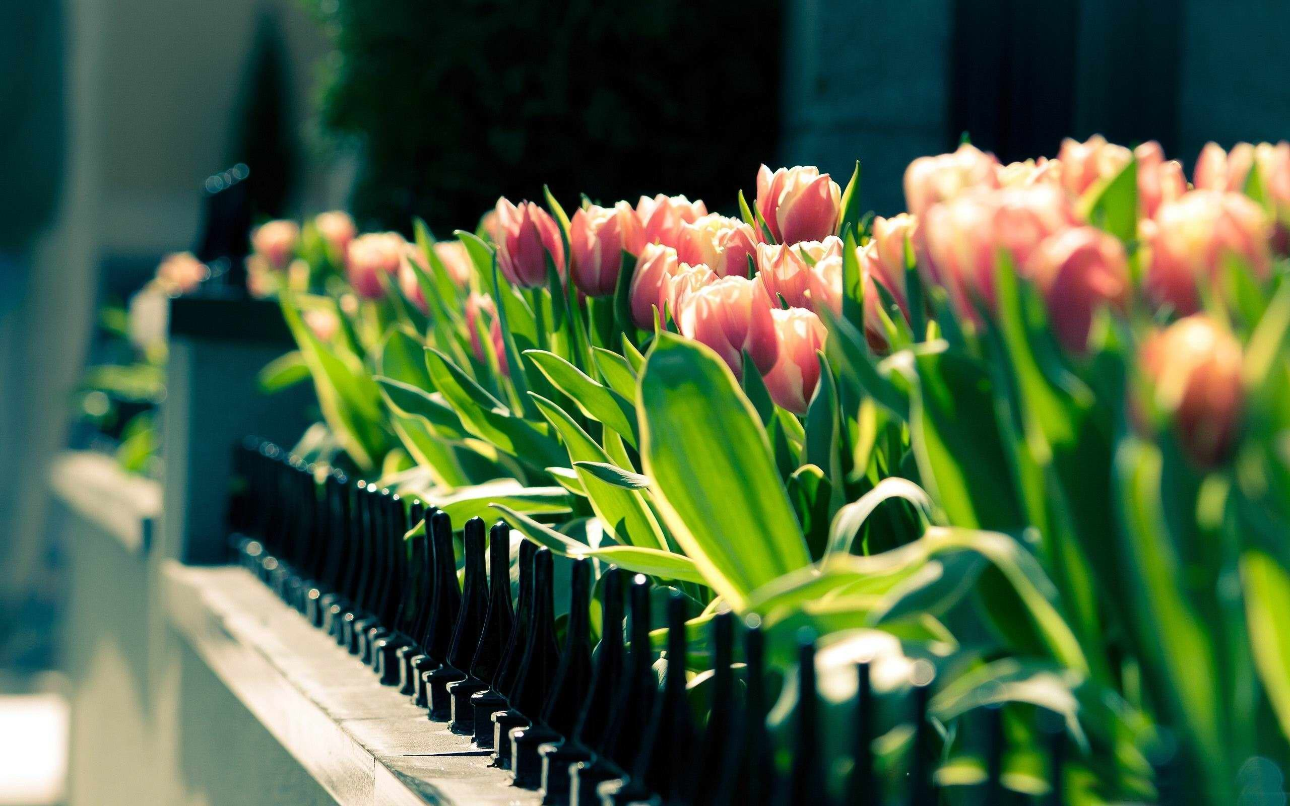 63 Springtime Wallpapers on WallpaperPlay 2560x1600