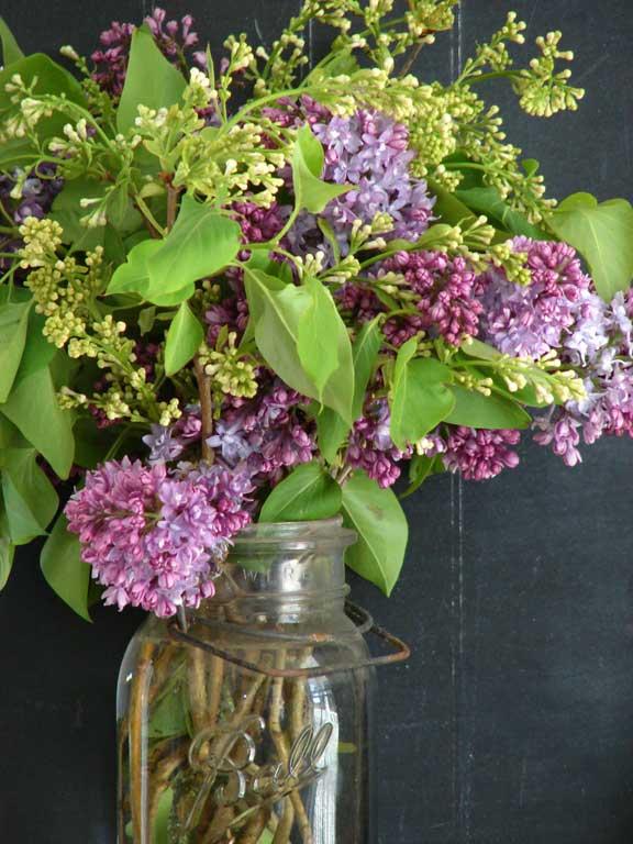 Lilac Lilac wallpaper 576x768