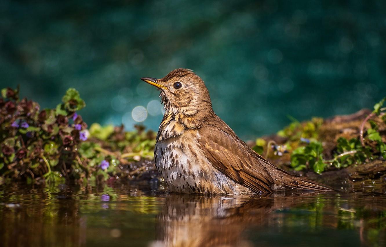 Wallpaper water nature bird vegetation bathing bokeh Tamas 1332x850