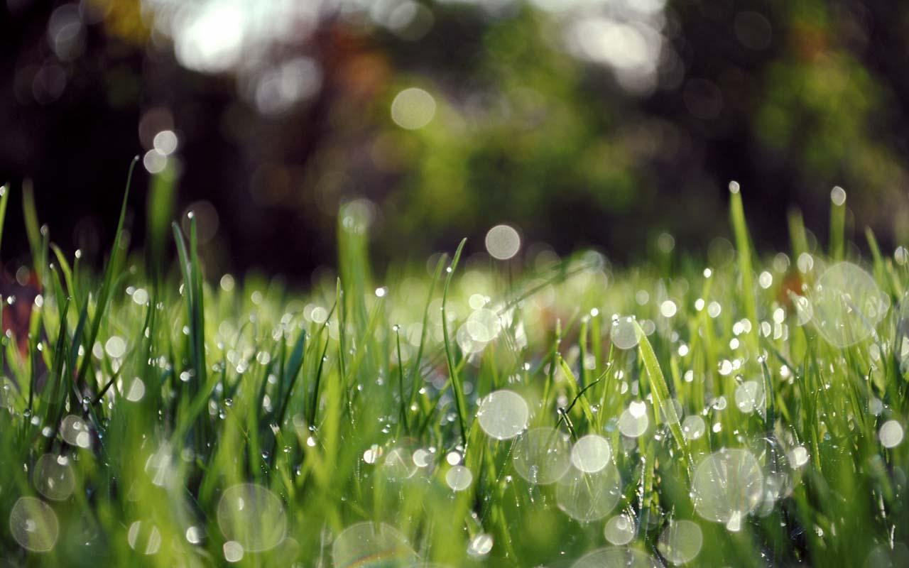 Free Download Download Ios 7 Rain Drops Green Grass For