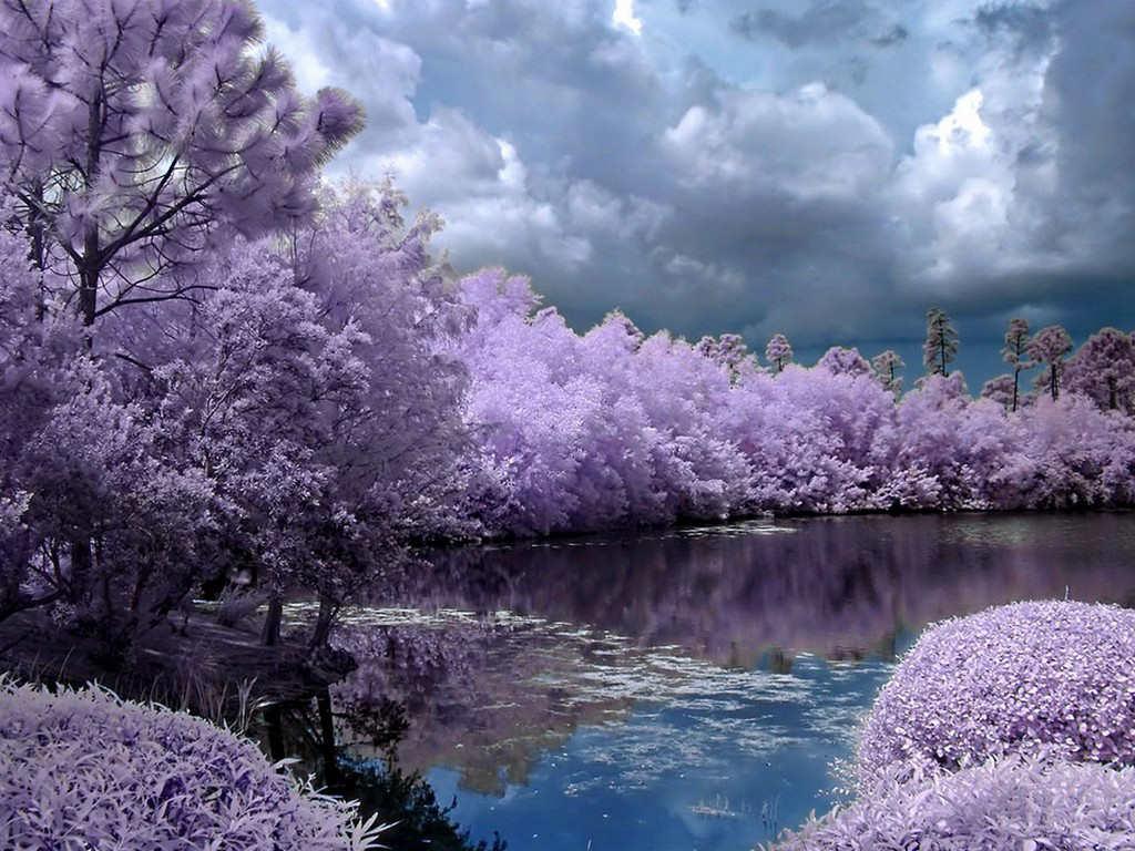 Tags beautiful nature beautiful pic beautiful season spring season 1024x768