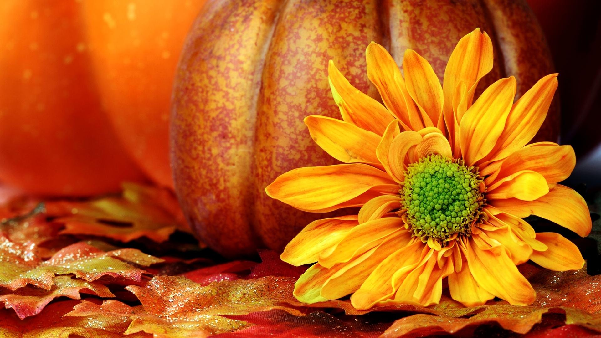 Pumpkin Wallpaper 25774 1920x1080px 1920x1080