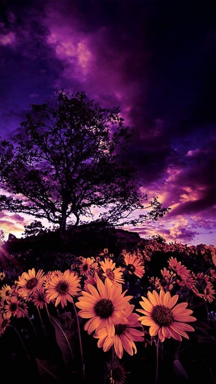 Free Download Pin By Sheri Lynn On Purple With Images Photography Wallpaper 720x1280 For Your Desktop Mobile Tablet Explore 48 Clouds Sunflower Aesthetic Wallpapers Clouds Sunflower Aesthetic Wallpapers Sunflower