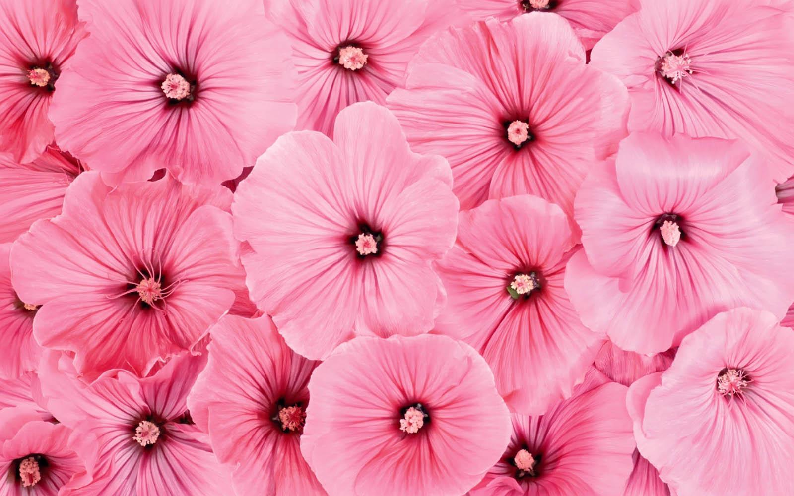 Pink Flowers Background Wallpapersafari