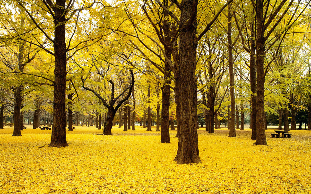 wallpapers japanese autumn scenery wallpaper 6 japanese autumn scenery 1280x800