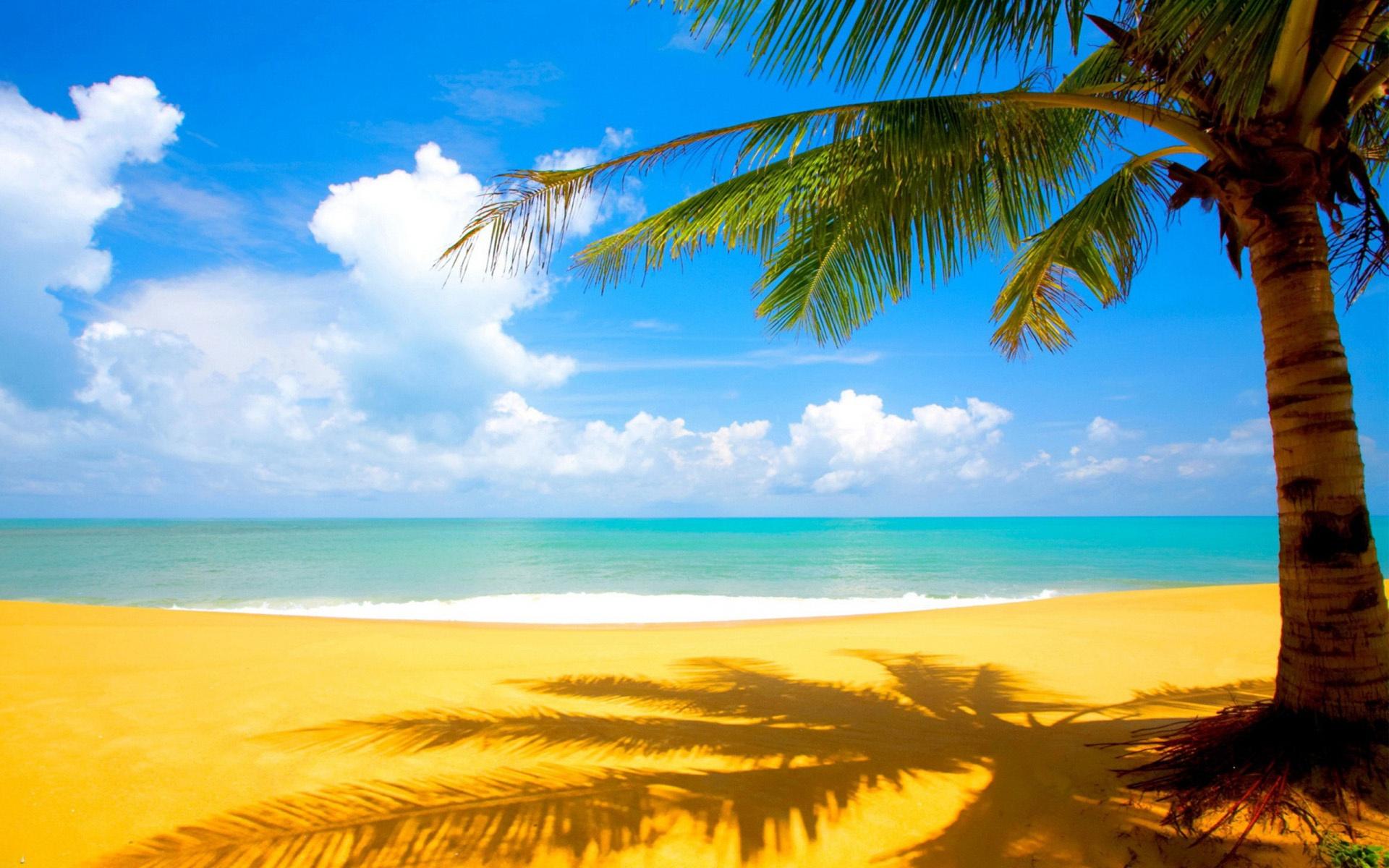 Palm Tree Beach Wallpaper