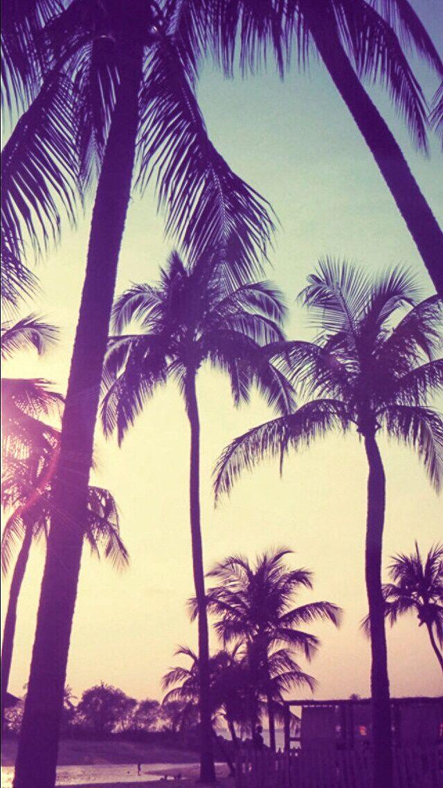 Palm trees sunset iphone wallpaper Palm trees Pinterest Palm 640x1136