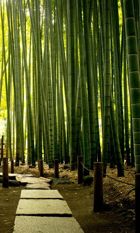 bamboo looking wallpaper wallpapersafari