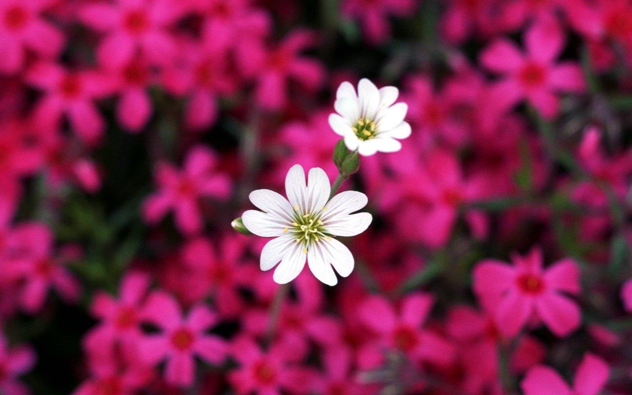 Pretty Flower Wallpaper Wallpapersafari
