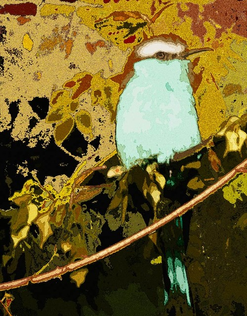 Blue Bird Wall Mural   Contemporary   Wallpaper   by Murals Your Way 500x640