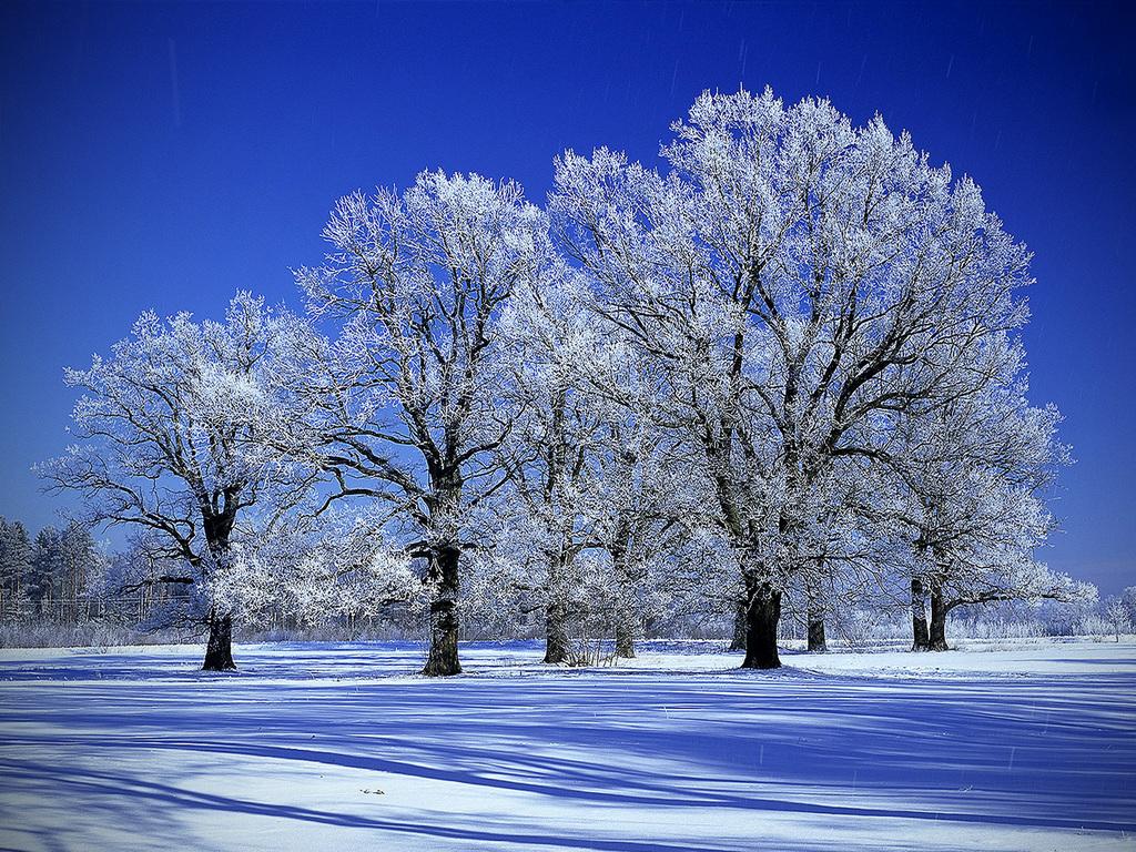 Snowy Trees wallpaper 1024x768 30313 1024x768
