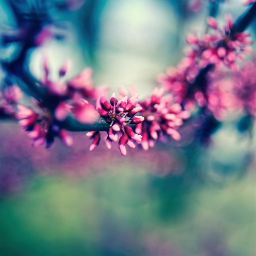 Beautiful Spring Colours iPad Air Wallpaper Download iPhone 1024x1024