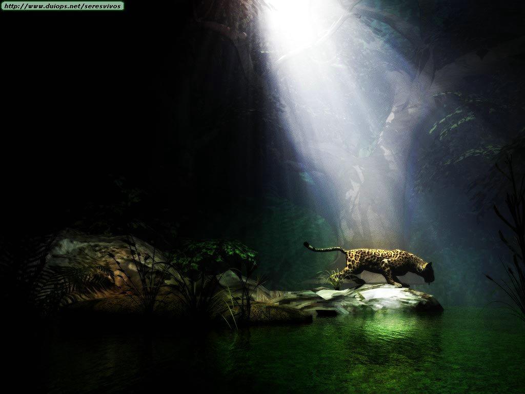 Leopards cheetahs and jaguars photos III 1024x768