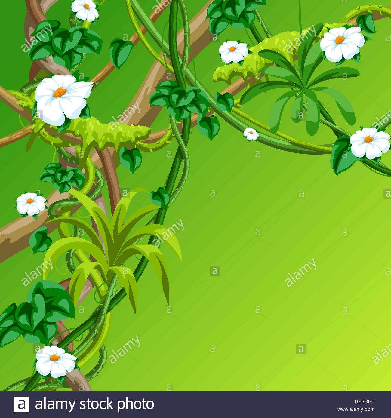 Twisted wild lianas branches background Jungle vines plants Stock 1300x1390