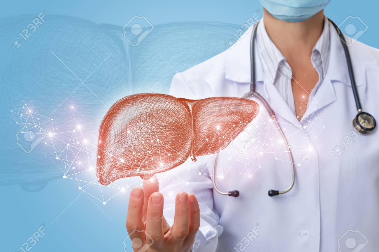 Doctor Shows Liver In Hand On A Blue Background Stock Photo 1300x866