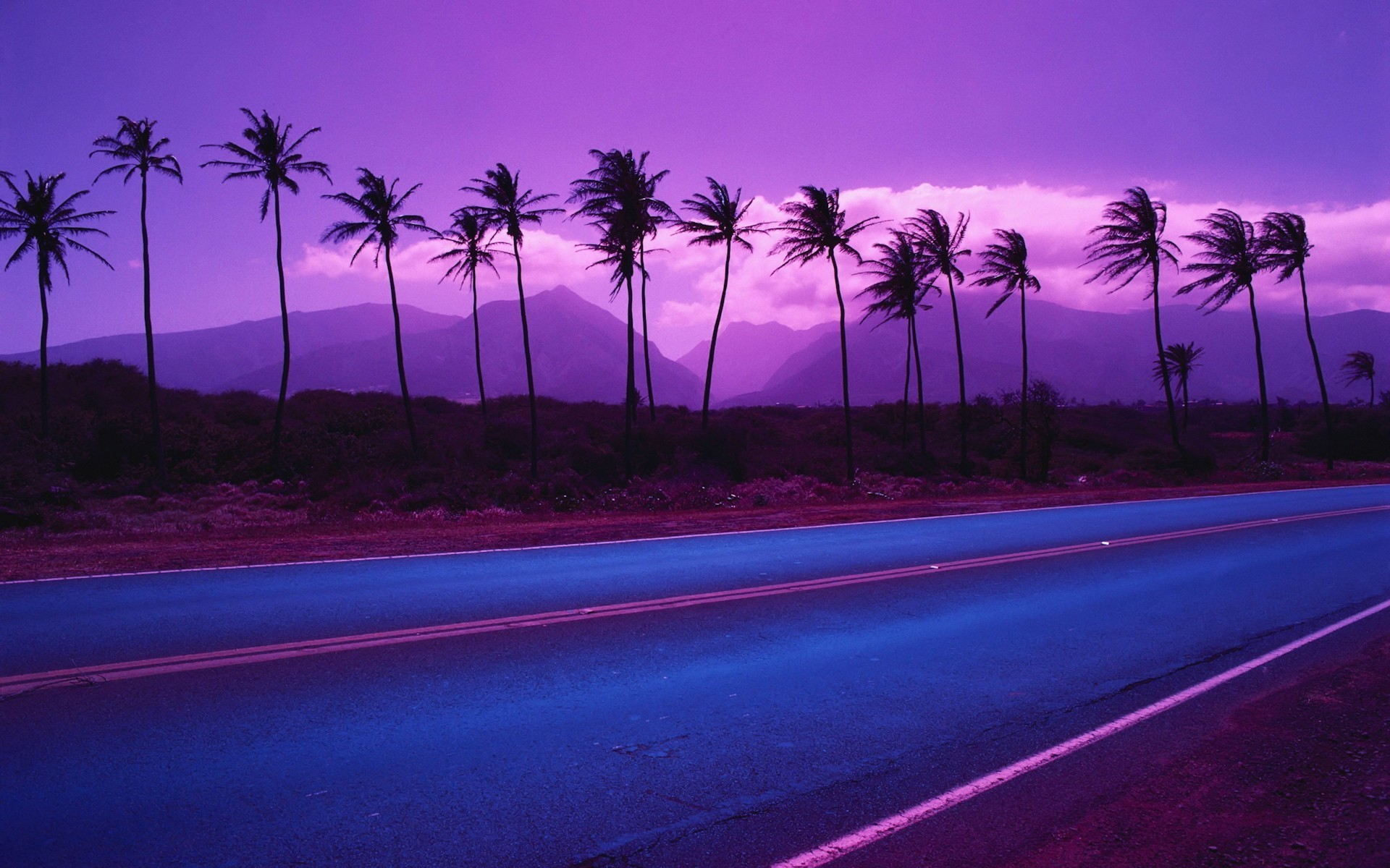 Purple Palm Trees Wallpapers Purple Palm Trees Myspace Backgrounds 1920x1200