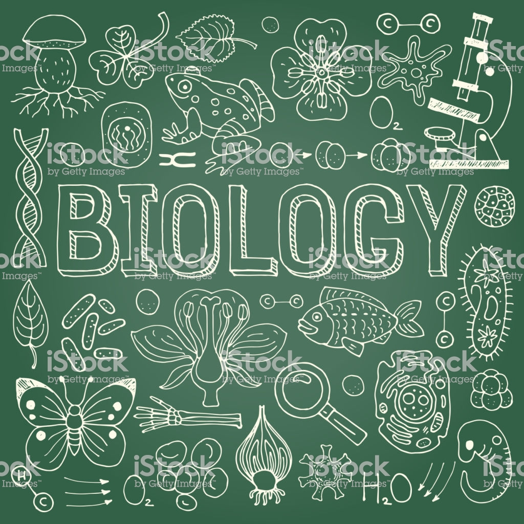 Biology Background Stock Illustration   Download Image Now   iStock 1024x1024