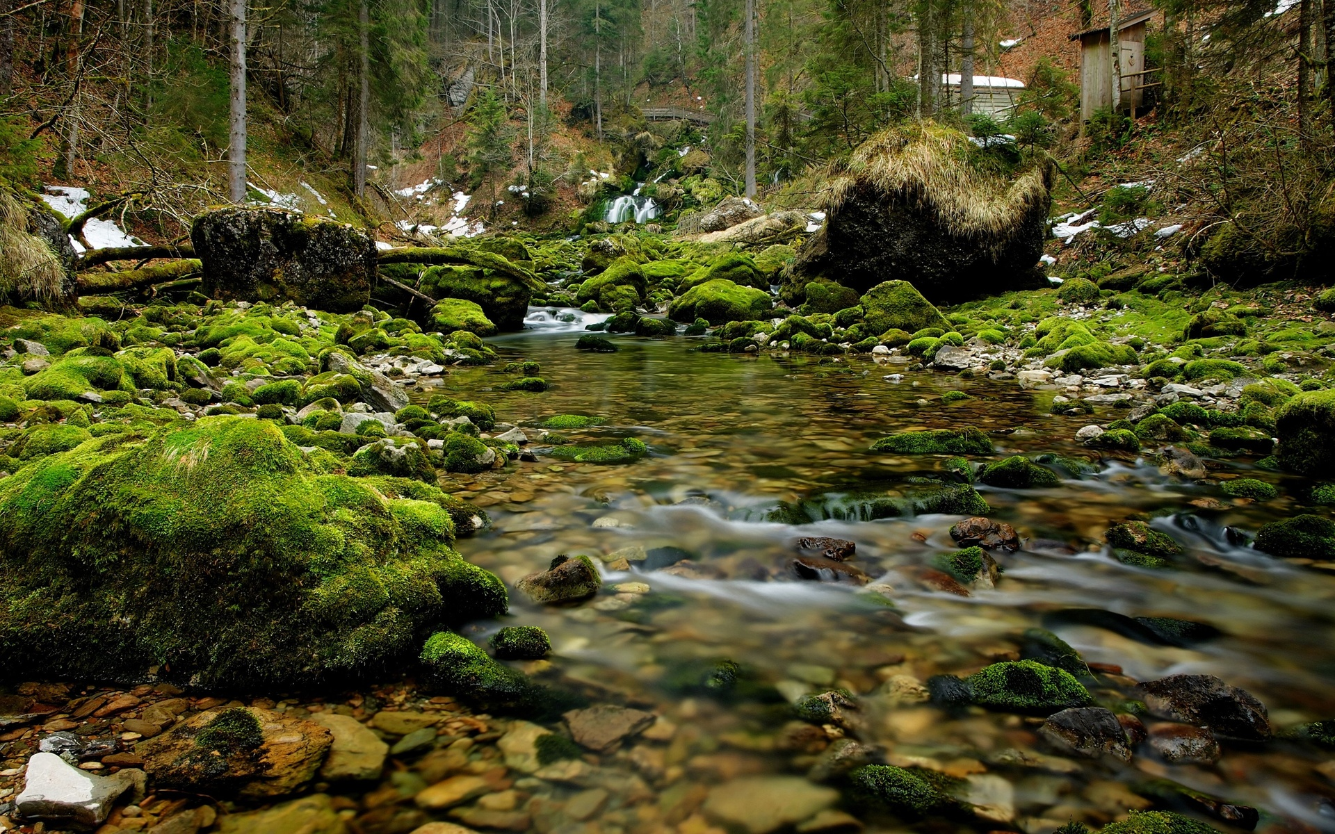 river rocks wood moss nature wallpaper background 1920x1200