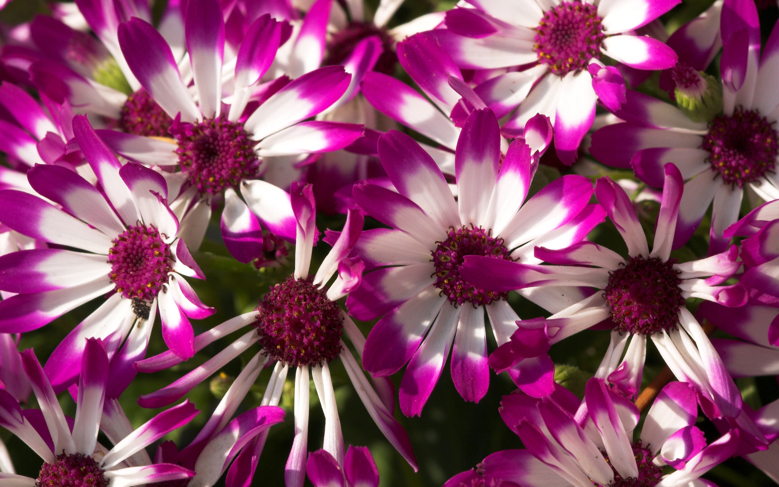 Beautiful Purple Flowers Wallpapers HD Wallpapers 2560x1600
