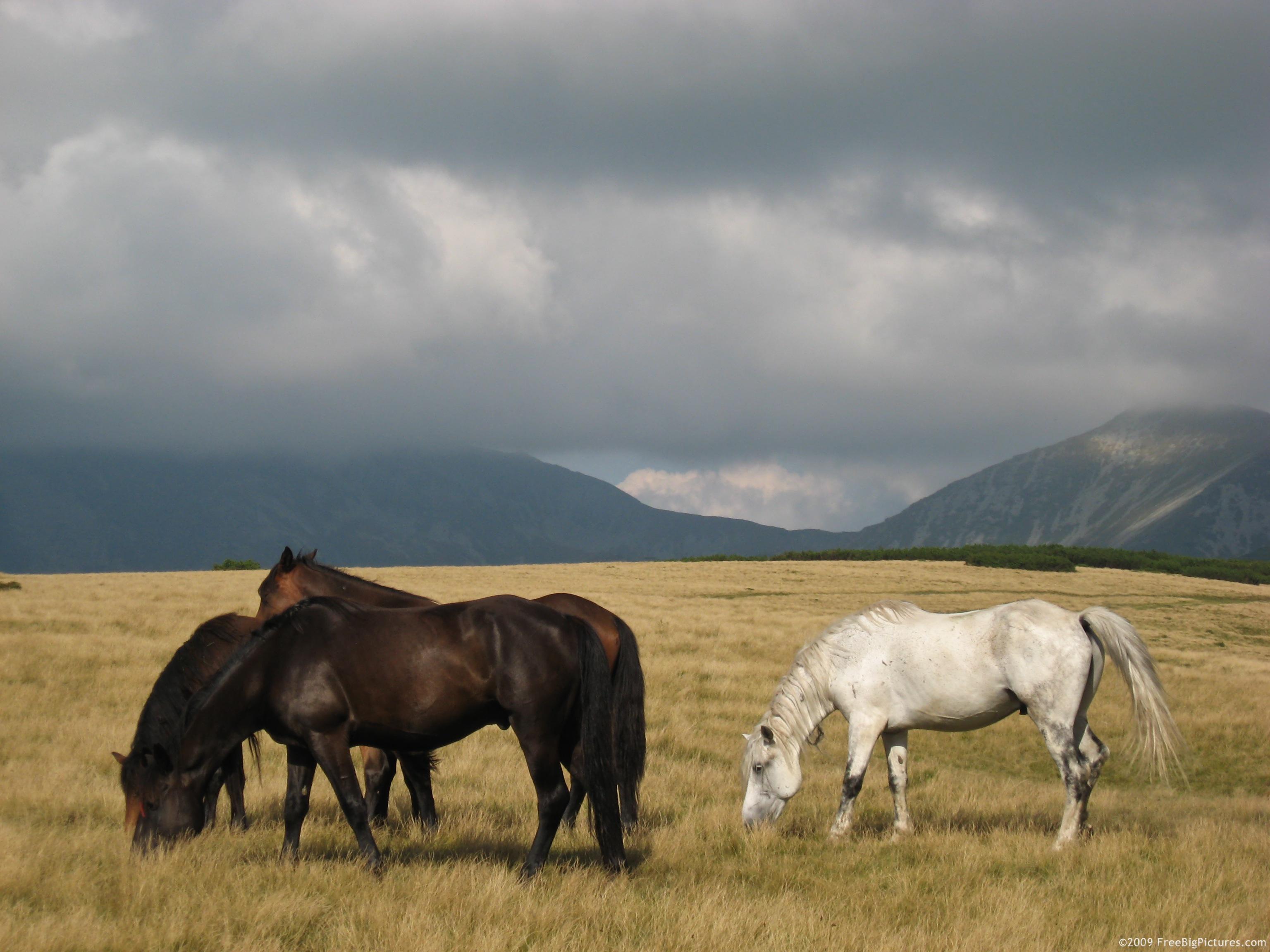 Grazing Horses Desktop Background Wallpapers HD   492400 3072x2304